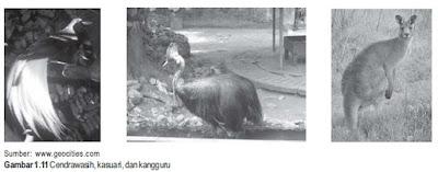 Fauna Australis