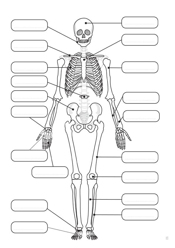imagenes para colorear esqueleto humano
