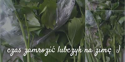 maggi lubczyk zioło w ogrodzie