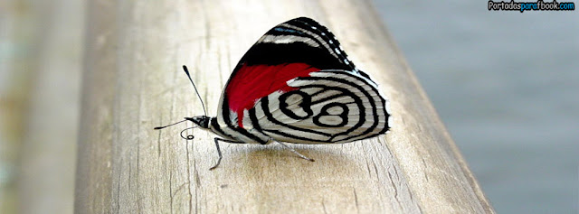 mariposa blanca y roja