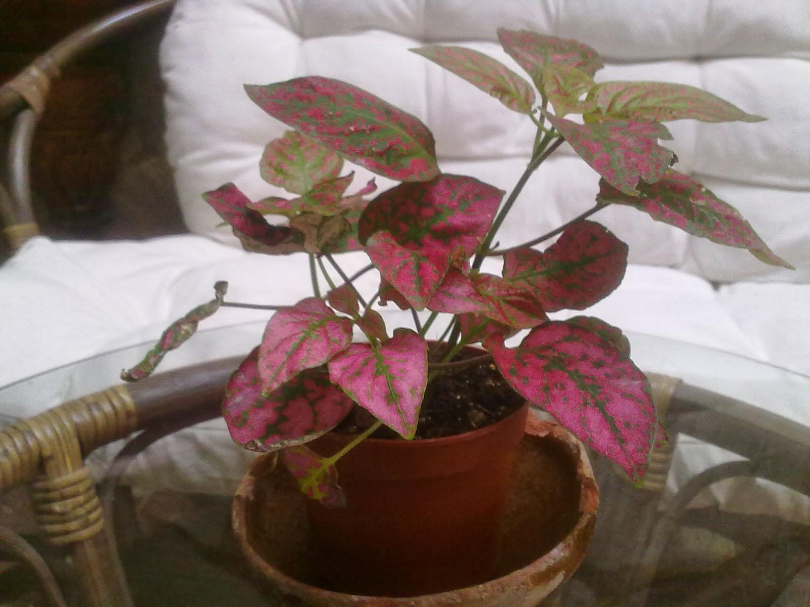 Que plantas poner en el interior de mi casa entre patios for Como decorar el interior de mi casa
