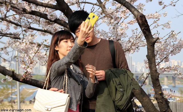 Pareja coreana sacándose una foto delante de los cerezos en flor