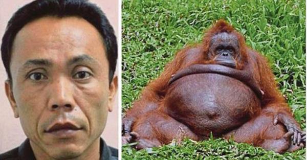 KECOH! Orang Utan Bunting Diperkosa Pekerja Zoo