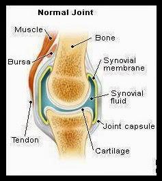 struktur lutut manusia