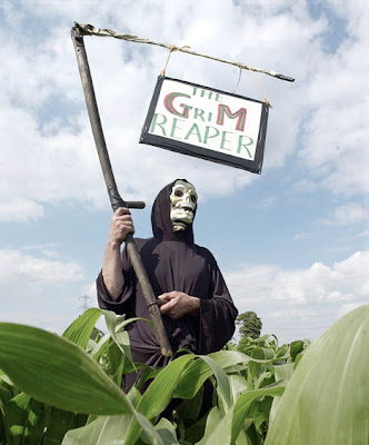 gmo's linked to organ disruption in 19 studies