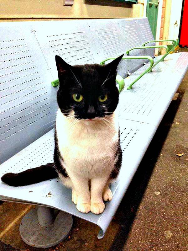train station cat london england