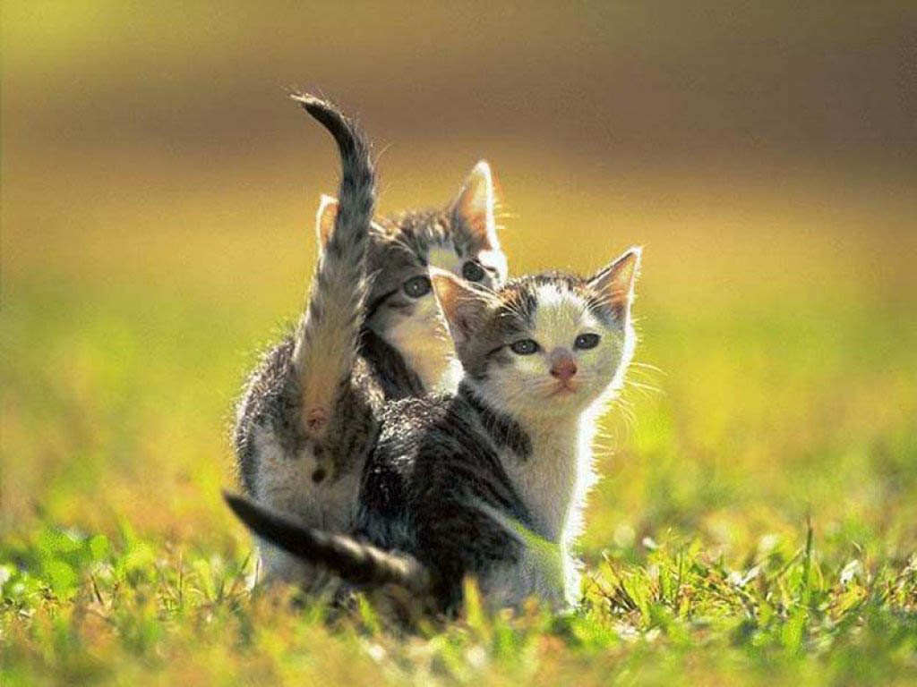 cute kitten wallpaper kittens - photo #25