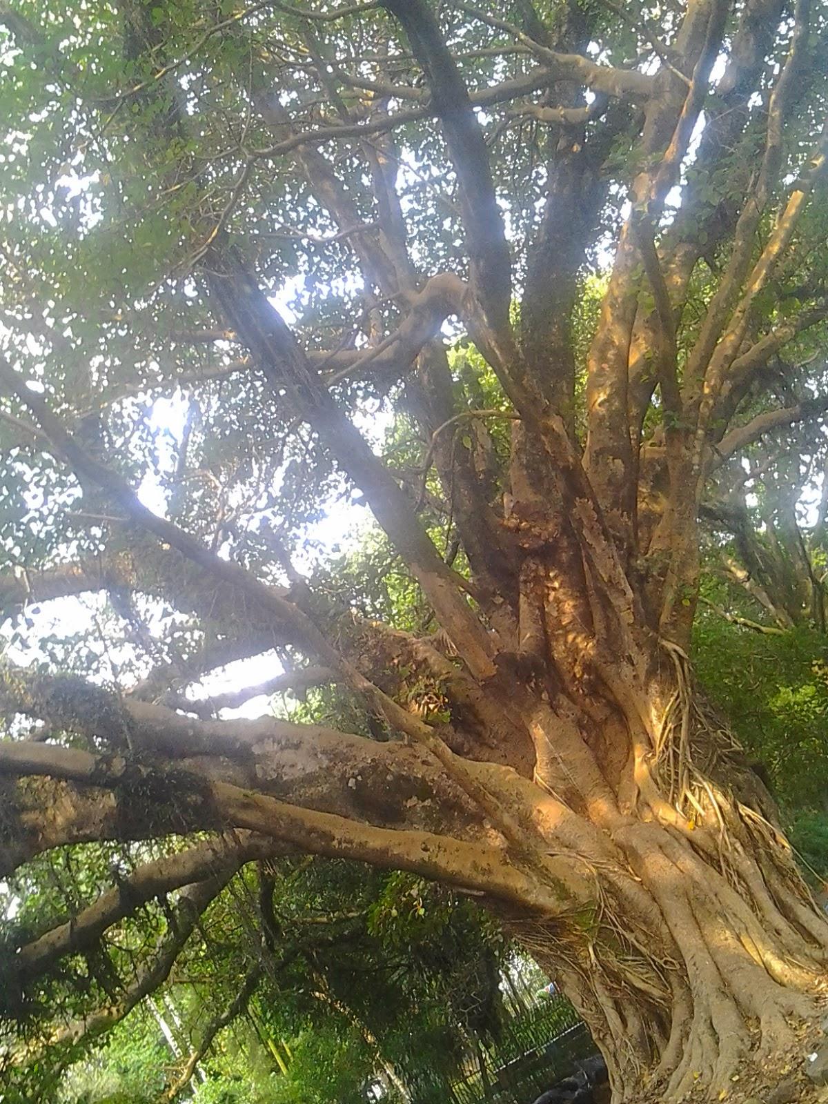 Foto tirada no Parque da Luz
