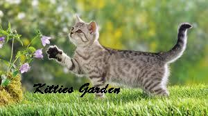 Kitties Garden
