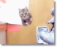 videos de gatas