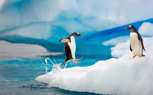 Funny photo with a penguin running and jumping on ice