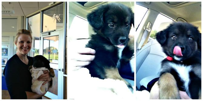 The Holland House: Brees on her way home