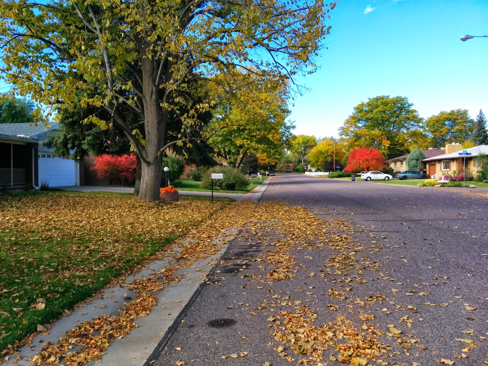 Falling leaves road woman blog