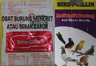 Obat Mencret Untuk Burung