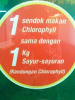klorofil nutrisi terbaik