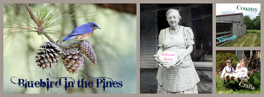 Bluebird in the Pines