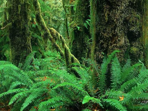 Rainforest Olympic National Park
