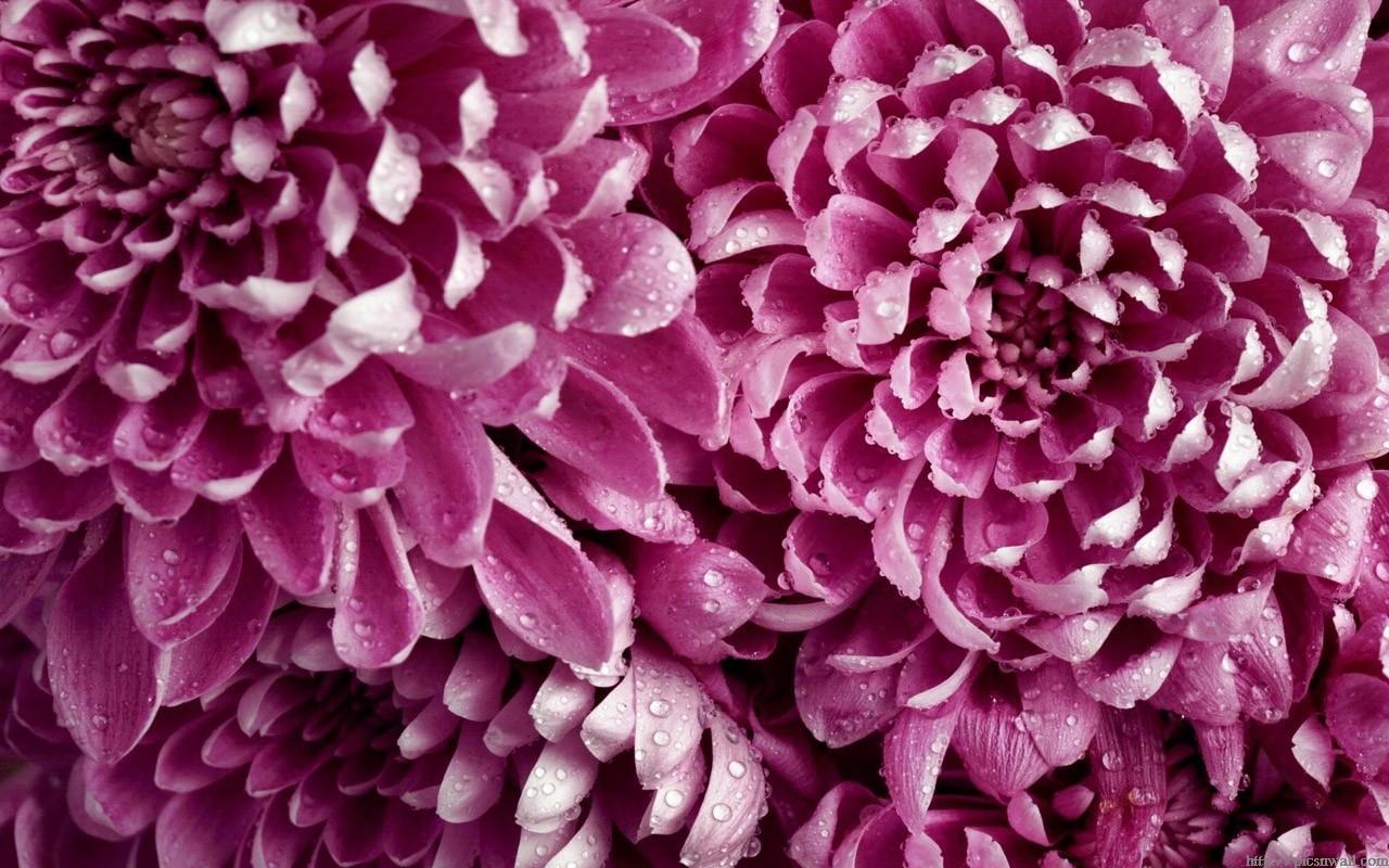 Best Flower Wallpapers In HD 1366x768