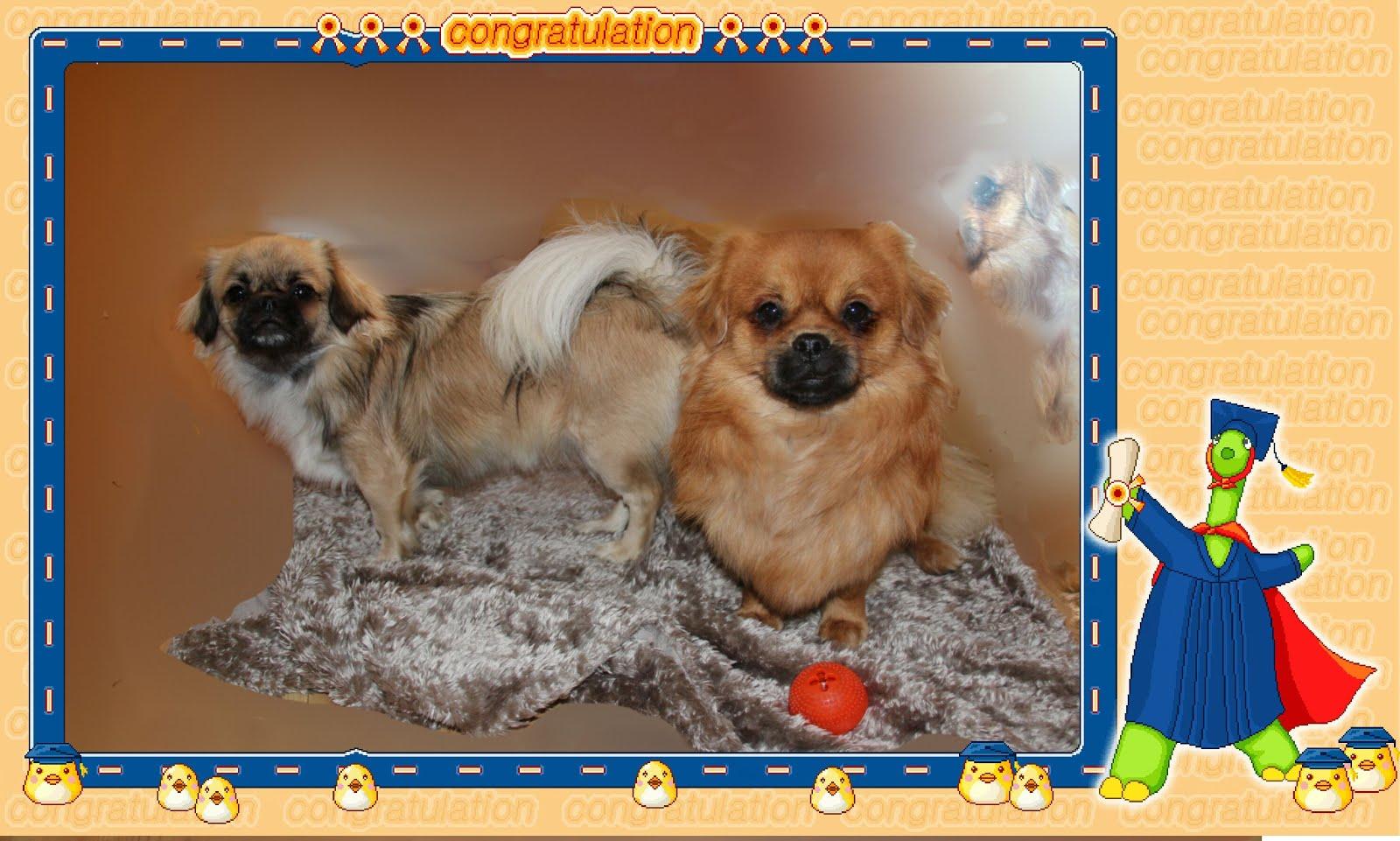Grattis med 1 årsdagen, Roxy og Reodor.