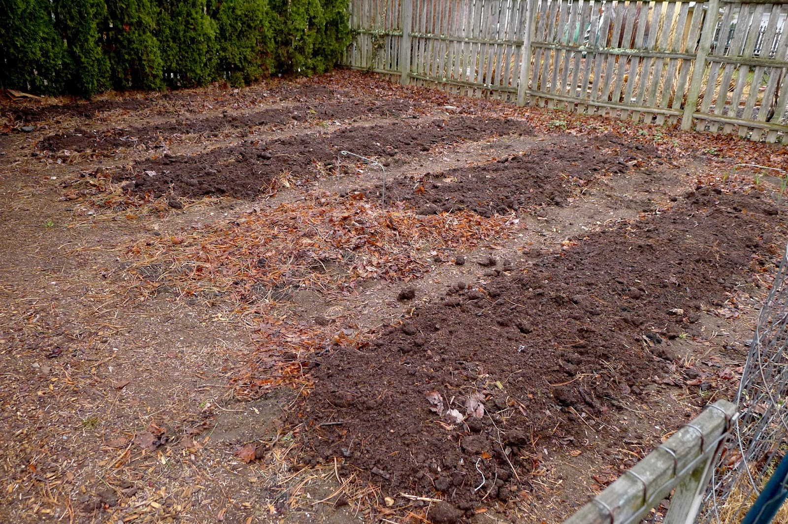 Aged horse manure on vegetable beds