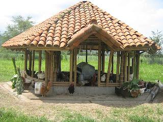 Centro latinoamericano de especies menores clem lidera for Kioscos de madera baratos