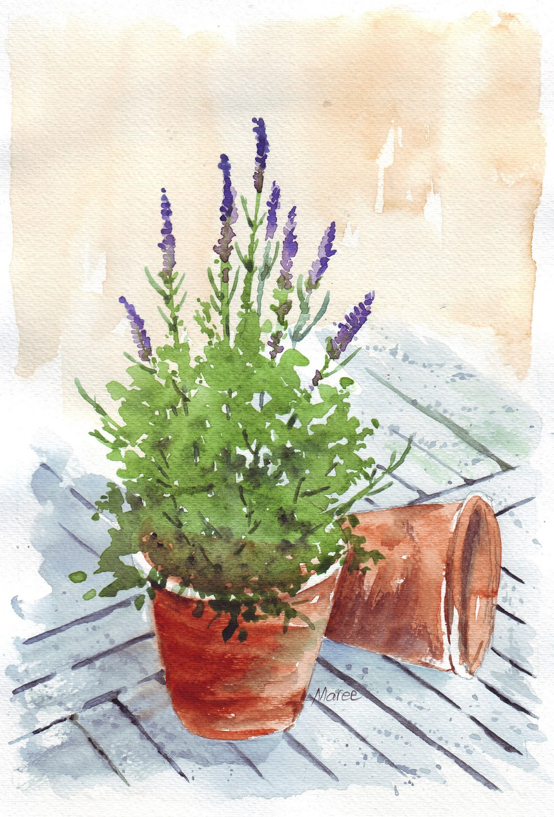 Art and creativity may 2013 - Growing lavender pot ...
