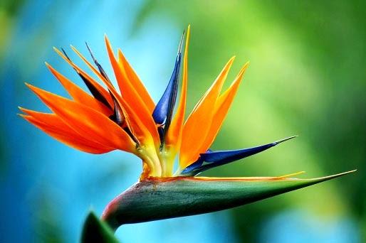 kenapa hanya orang baik yang masuk surga - bird of paradise