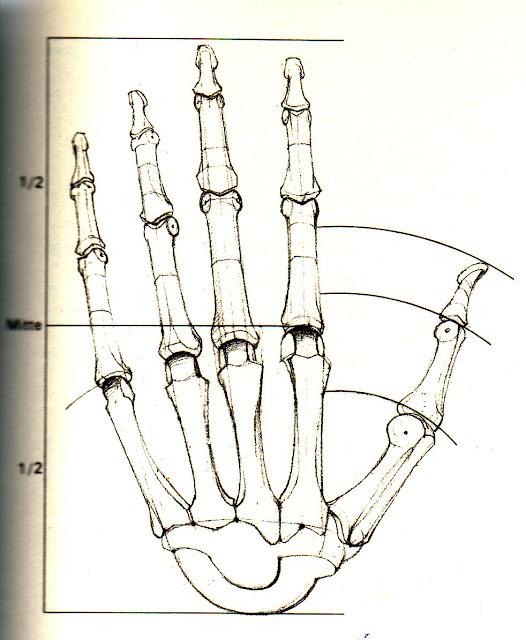 Anatomy of hand - Gottfried Bammes | Teaching art