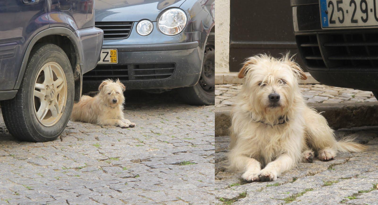 Scruffy Dogs