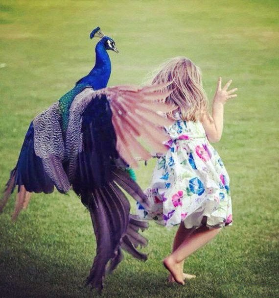 http://funkidos.com/pictures-world/funny-world/top-14-photos-of-birds-attacking-people