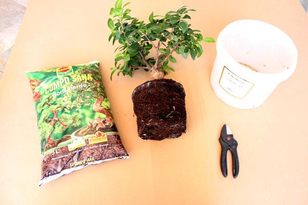 bonsai pflege bonsai umtopfen. Black Bedroom Furniture Sets. Home Design Ideas