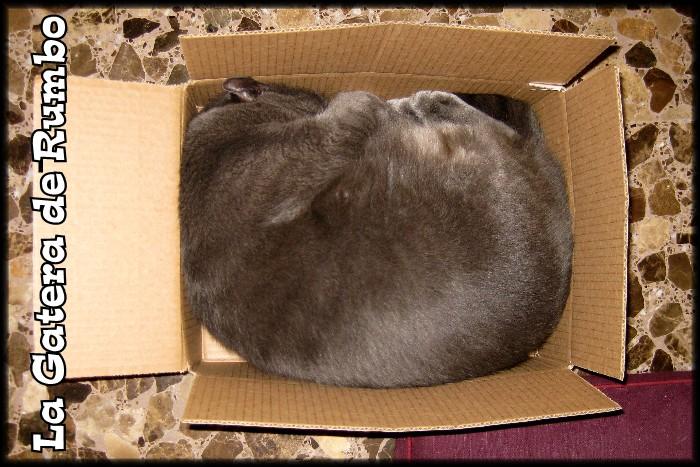 Gato durmiendo en una caja