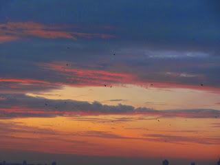 рассвет, утро, Донецк, пейзаж, небо, облака, красное небо, вороны летят