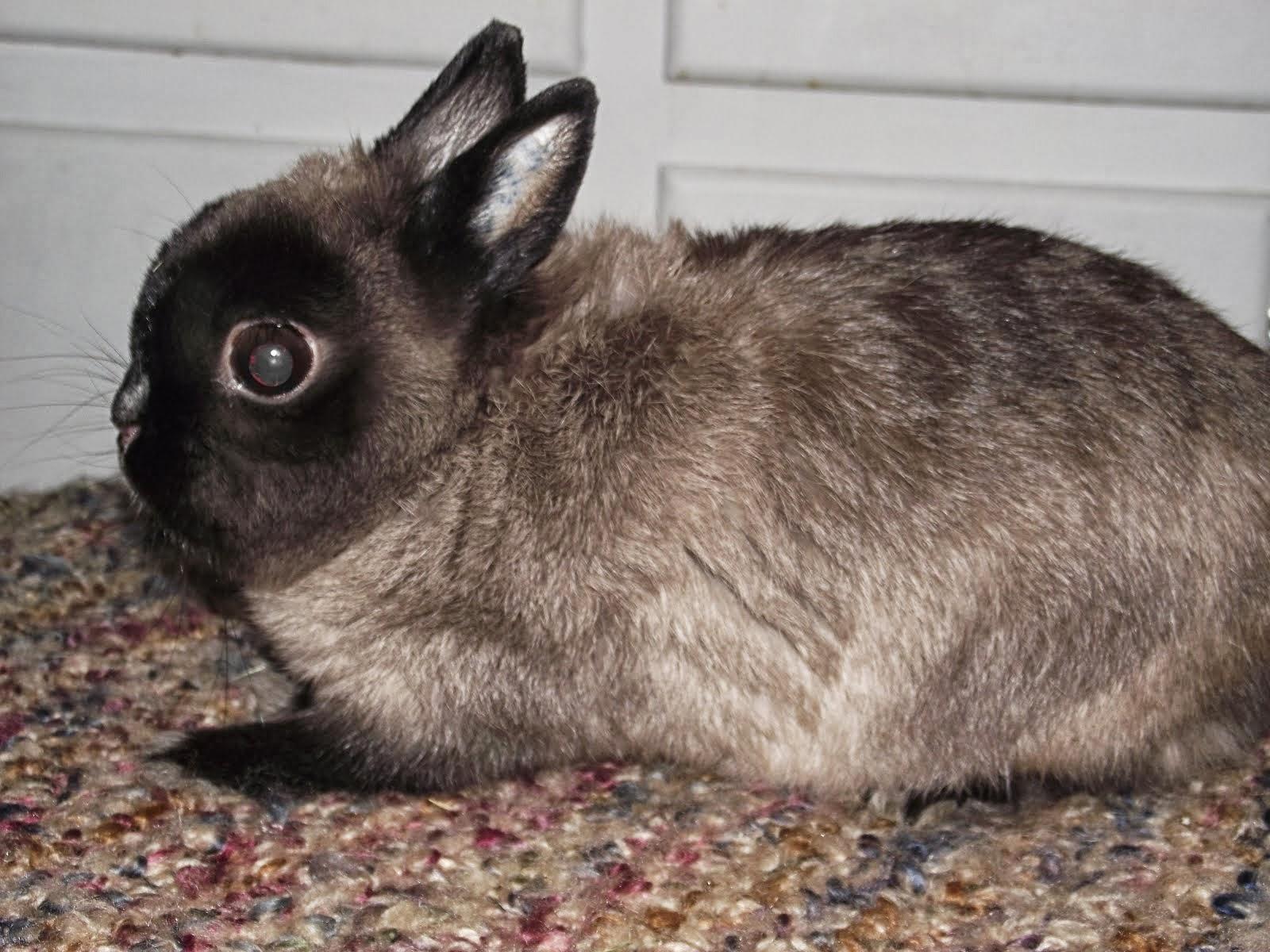 BeeJay Bunny Boy