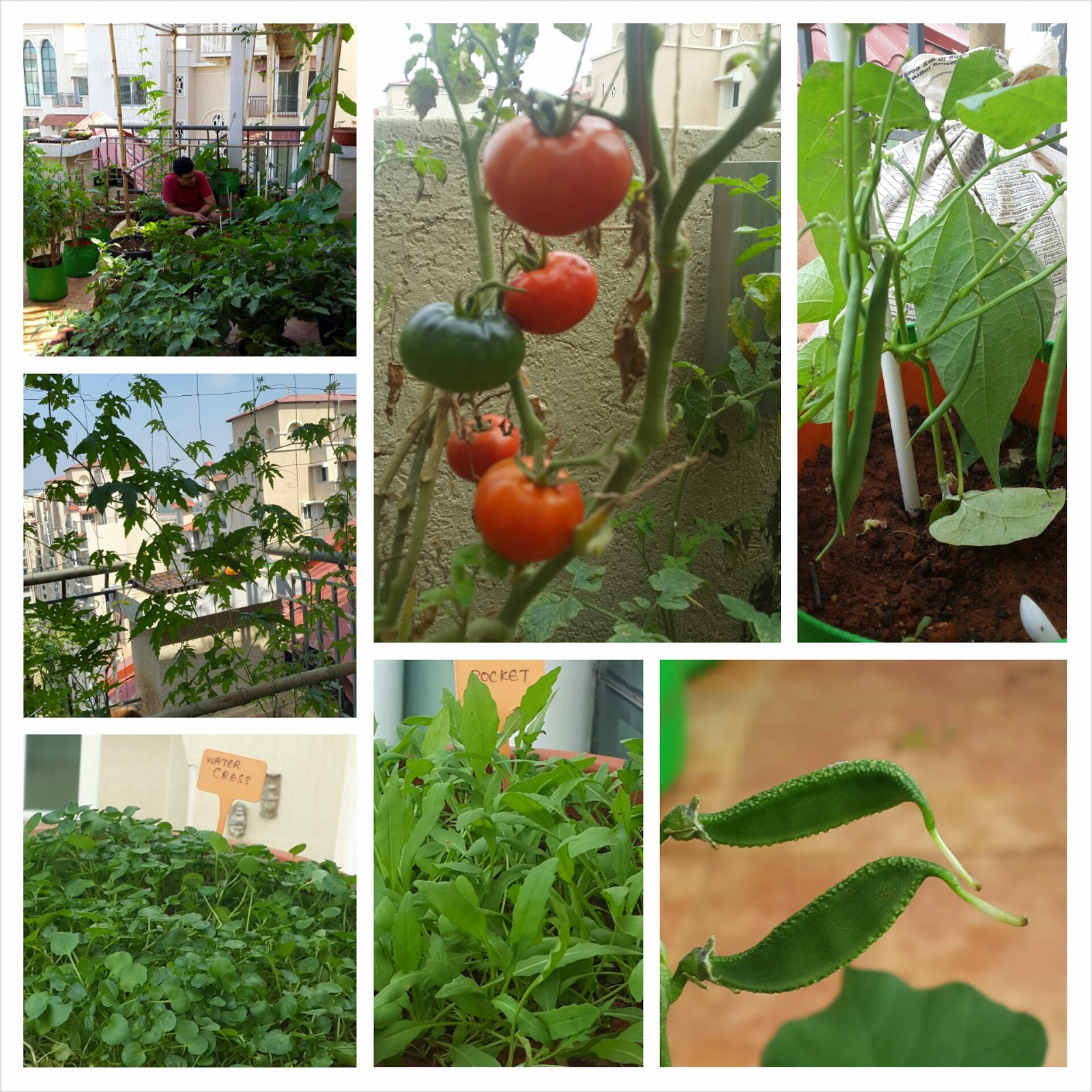 Preeti Shenoys blog On starting an organic terrace garden