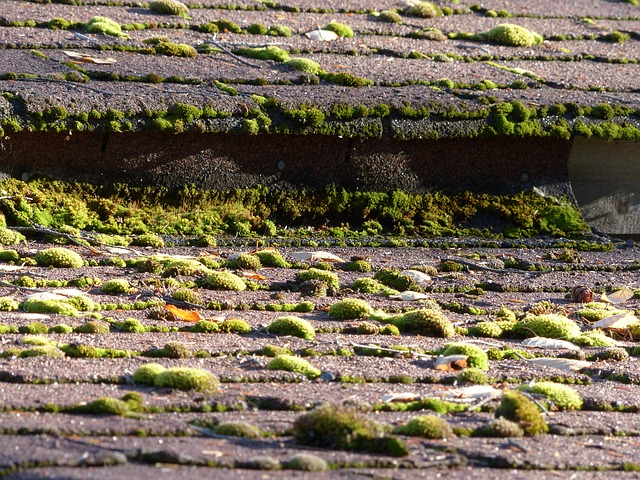Why Is Moss On The Roof Bad?