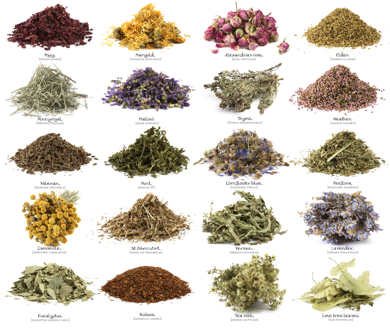 Different herbs used for medicine hat