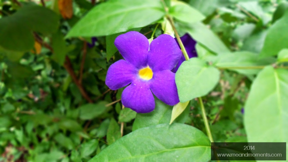 purple flower, flower photography