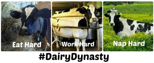 dairy dynasty duck dynasty