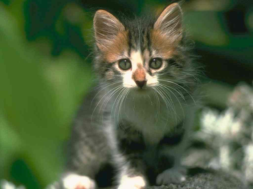 http://3.bp.blogspot.com/-nQIMzroIez8/Tdff22G4uCI/AAAAAAAAABY/K0KlzynL7Zc/s1600/017-cute-cat-wallpaper-animal.jpg