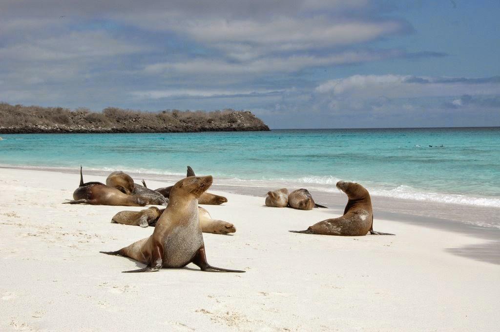 "<img src=""http://3.bp.blogspot.com/-nQPL1g6SXuA/VDP70eYR8uI/AAAAAAAAA7I/SOtYgIcMW08/s1600/bahia.jpg"" alt=""Top 10 Best Beaches in the World that are Very Beautiful"" />"