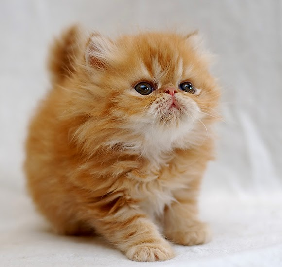 Top 5 Cute Cats Make Your Life Happier