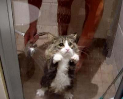 funny cat-11