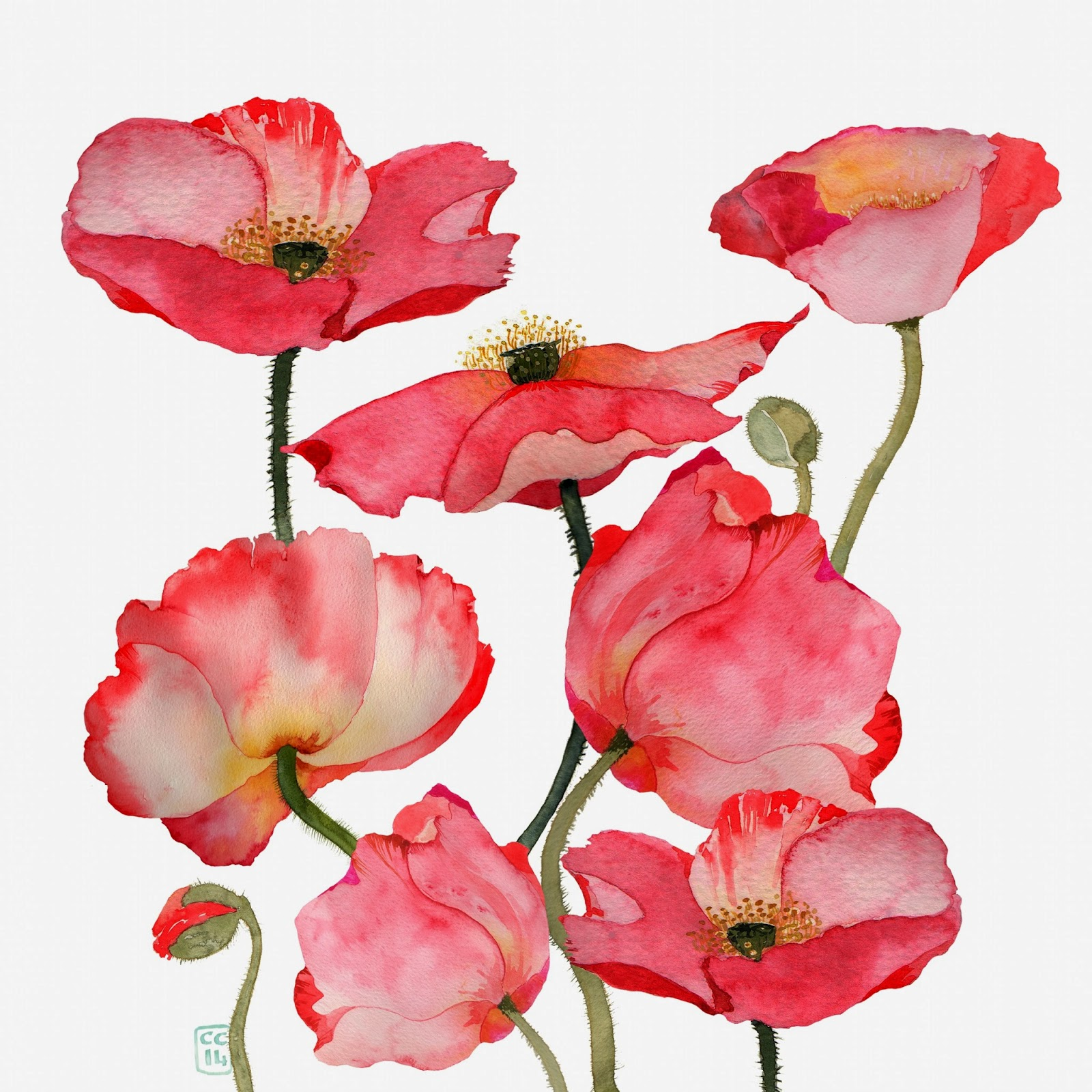 Deep cove flowers poppies and more poppies - High resolution watercolor flowers ...
