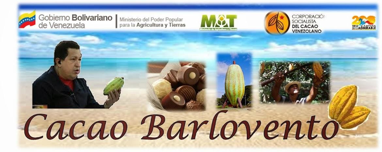 CACAO DE  BARLOVENTO