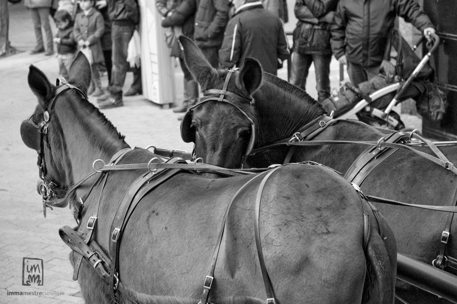 foto d'un cavall presumit mirant a la càmera