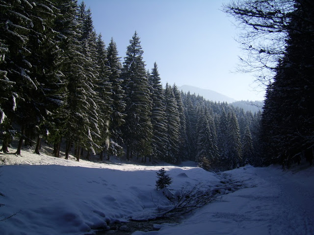 Beautiful pictures with winter