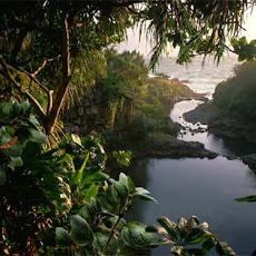 gambar hutan tropis, foto hutan