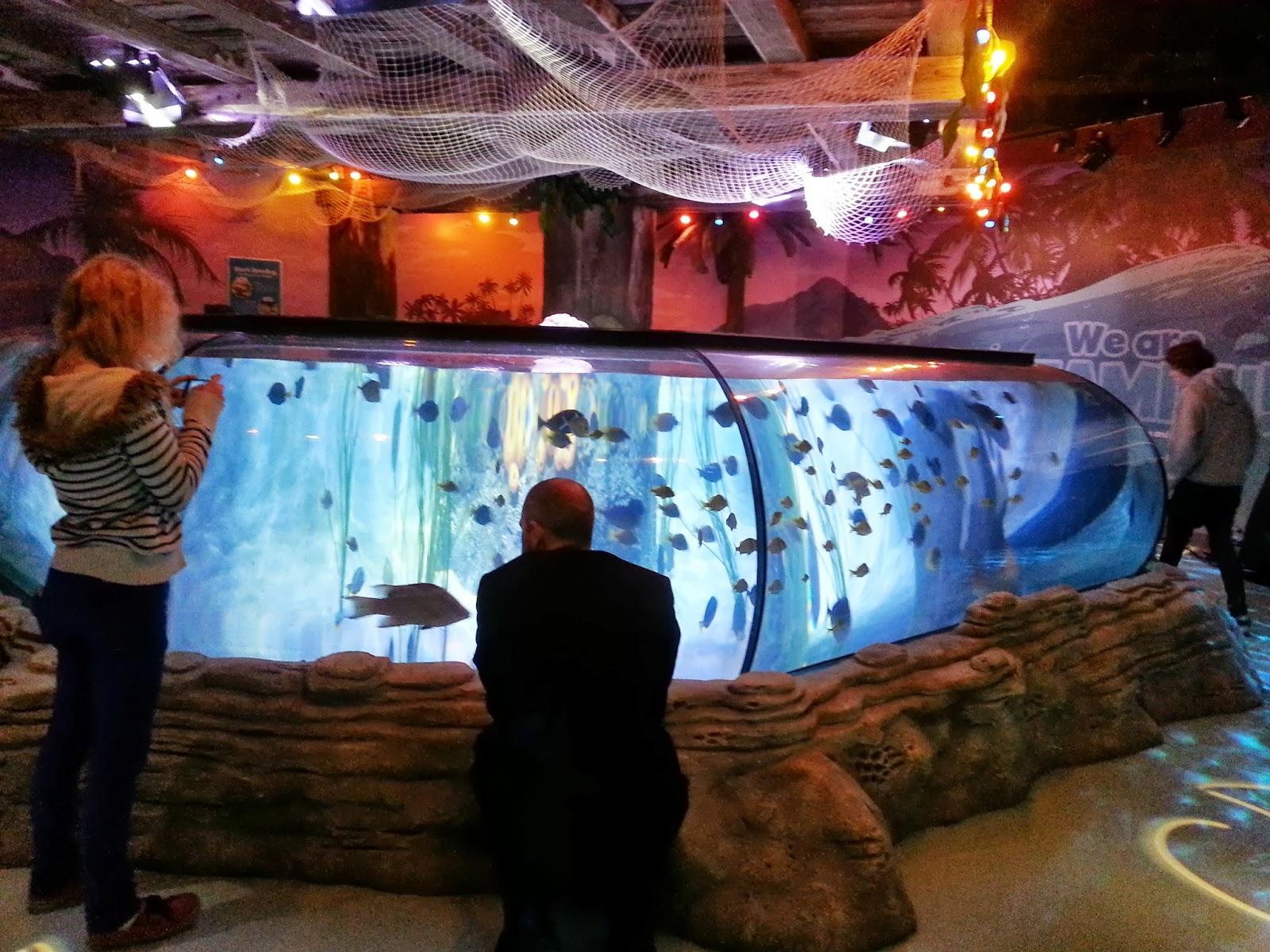 The Brick Castle: The New SEA LIFE Centre, Trafford Park, Manchester