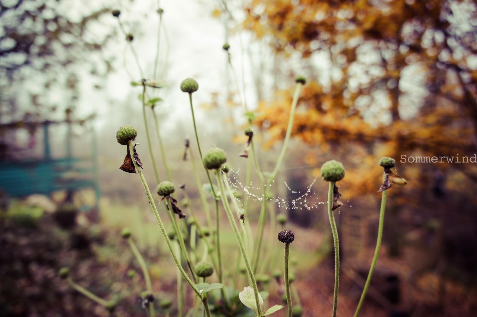 November Stimmung